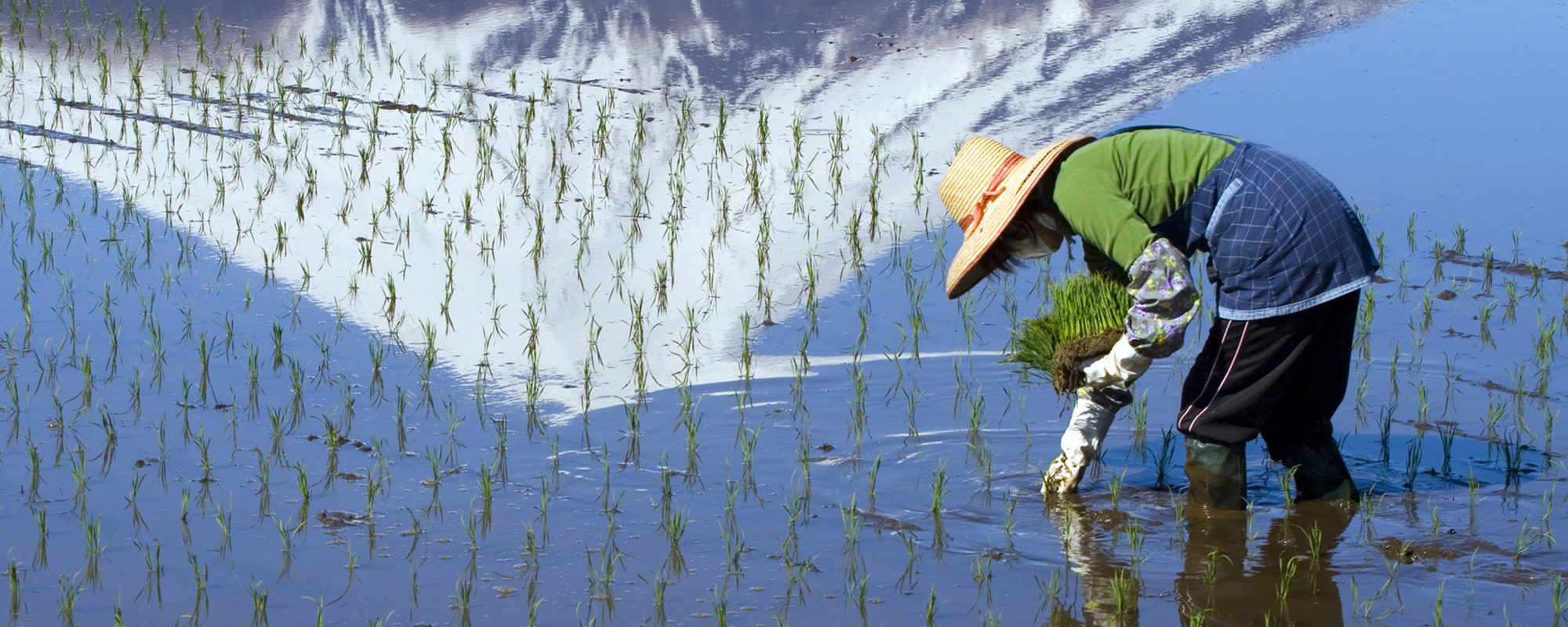Toyota helpt Japanse rijstboeren beter te produceren